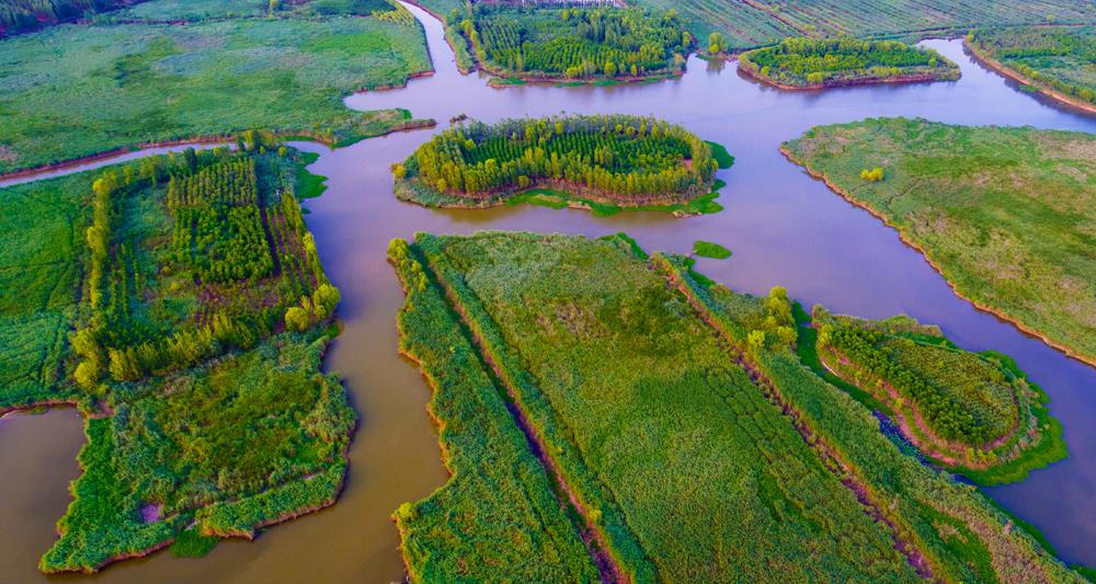 《齐鲁晚报》国际湿地城市攻坚,济宁年内湿地保护修复10万亩